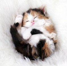 cute kitten 1